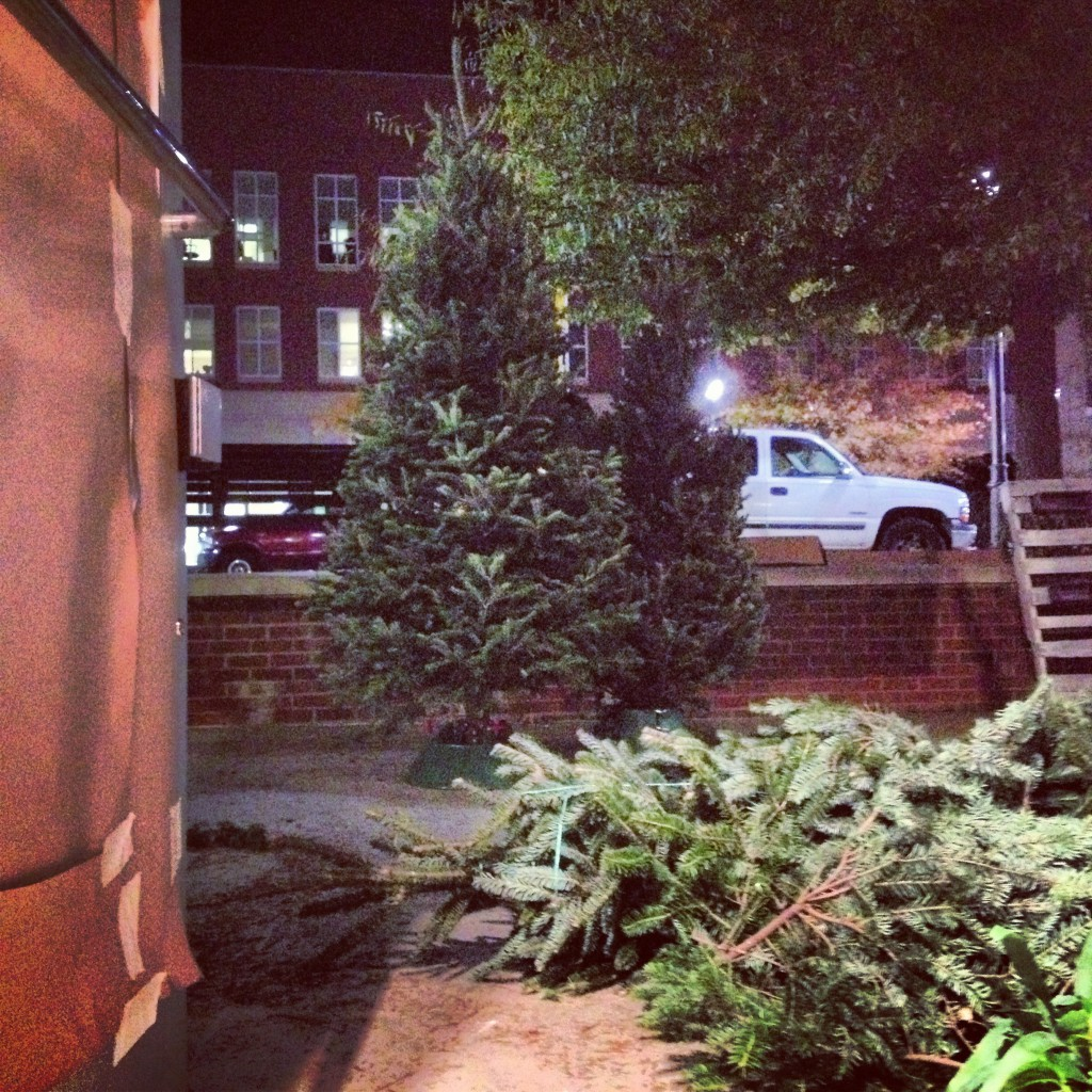 Alan and Jacob picked up our trees from the Asheville farmer's market, now we're just making space for them in the store.